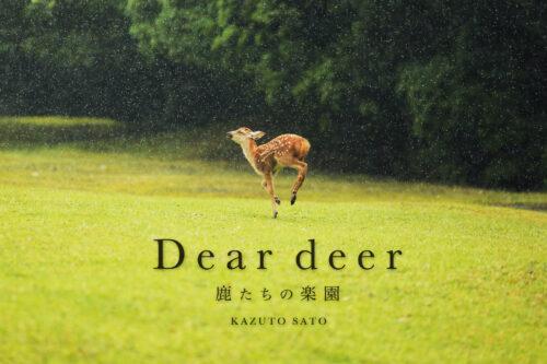 deardeer_cover